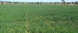 (su218)GRENFELL 632.56 ha or 1562 Acres,$1,055m
