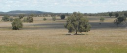 (jb93) TRUNDLE 420Acres (174Ha),  $295,000