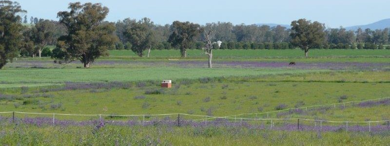 """(su23) """"Chefrolae"""" Eugowra 5 bed, 40Ac town water $430K"""