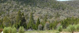 "(su25) GOOLOOGOONG ""ALKOMA""  1195 acres 484 Ha  $165,000"