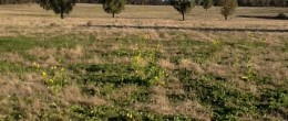 (jb48)  Trundle 470 Hectares or 1160 acres $ UNDER CONTRACT