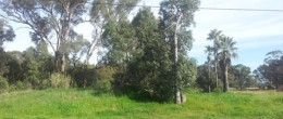 (bz107) 25 or Lot 7 Burril Street. Tomingley   SOLD