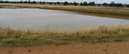 """(ps37)  Trundle/ Parkes area. """"Mixed Farm"""" 1036Ha Quality Property, Improved!"""