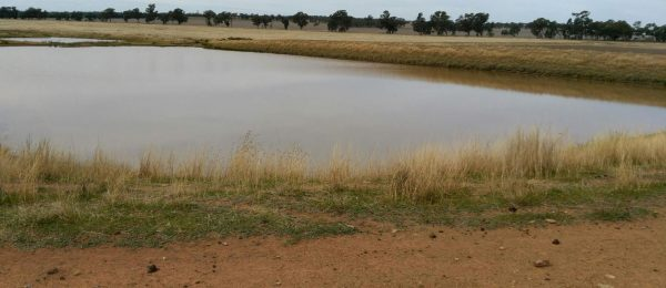 "(ps37)  Trundle/ Parkes area. ""Mixed Farm"" 1036Ha Quality Property, Improved!"