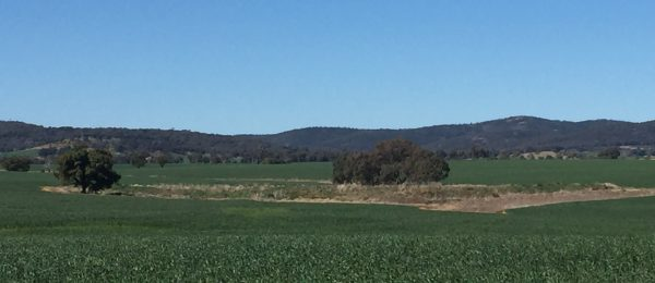 "(KB108) Parkes  "" Glenroy ""Alectown Cropping Property Under Contract"