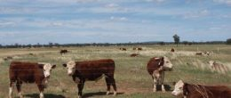 "(js156) Condobolin/ Tullamore Area 8186 Ac 3312.76 HA """"Mixed Farm"" $3.3m"