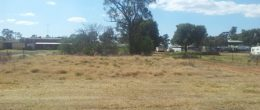 "(BZ166) Peak Hill/ Tomingley  8 Burril Street ""Vacant Land"" $20,000"