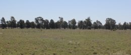 (BZ166a) Peak Hill/Tomingley 6.4Ha or 16Acres  $65000
