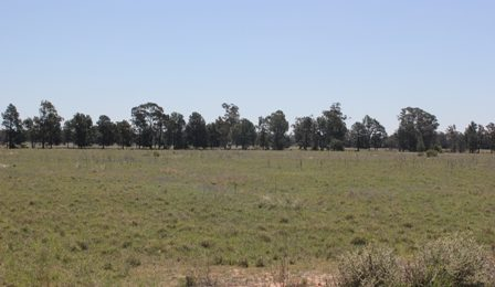 (BZ166a) Peak Hill/Tomingley 6.4Ha or 16Acres  $65000 SOLD