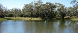 "(js203) Coolabah Lot 4 ""Part Mulga"" 4746 Acres 1921 Ha   $490,000"
