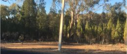 "(ps158)  Tomingley 1341 Gundong Road 100 acres 40 Ha  ""GETAWAY"" Under Contract (SOLD)"